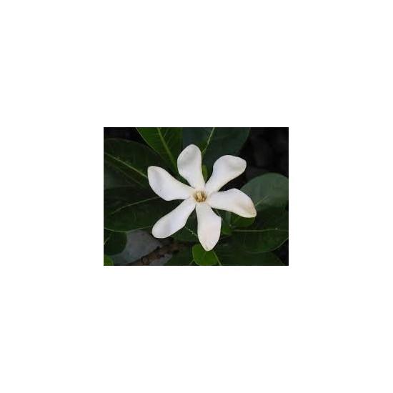 Monoï de Tahiti AOC parfumé